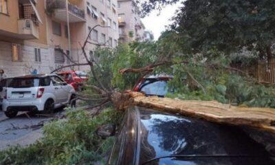 desolazione capitale: albero crollato su un'auto a roma